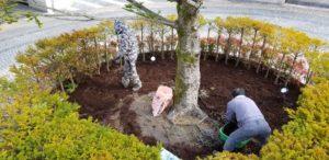 植木の土壌改善