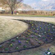 河口湖の花壇